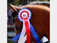 Nedji, cheval d'une vie…